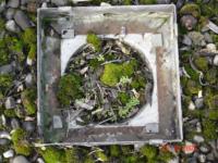 Ein verstopfter Dachwasserablauf birgt längerfristig Risiken und Kosten.