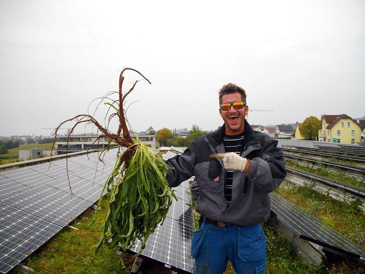 Starker Pflanzenwuchs mit Verwurzelung führen zu Langzeitschäden und Mehrkosten.