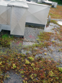 Da Dachflächen stark der Witterung ausgesetzt sind, sollten die Abläufe auch regelmässig gereinigt werden.